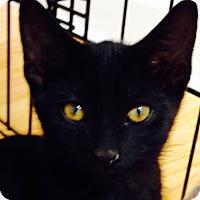 Adopt A Pet :: Molokai - Bedford, VA