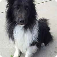 Adopt A Pet :: Jett - Pueblo West, CO