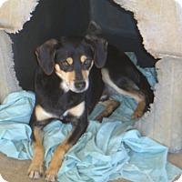 Adopt A Pet :: Charlie - Nashville, GA
