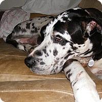 Adopt A Pet :: Harlie - Baden, PA