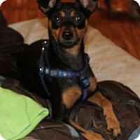 Adopt A Pet :: Marty - Daleville, AL