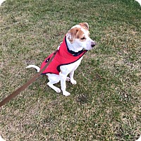 Adopt A Pet :: Joey - Boston, MA