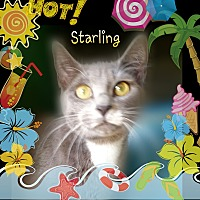 Adopt A Pet :: Starling aka MushMush - Ocala, FL