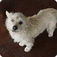 Adopt A Pet :: Norman - San Antonio, TX