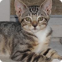 Adopt A Pet :: Birgitta - North Highlands, CA