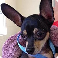 Adopt A Pet :: Zoe - geneva, FL