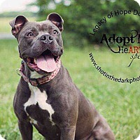 Adopt A Pet :: Bubbles - Broken Arrow, OK