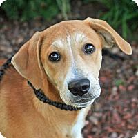 Adopt A Pet :: Angelina - Joliet, IL