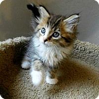 Adopt A Pet :: Logan - Davis, CA