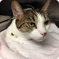 Adopt A Pet :: Charlie - Voorhees, NJ