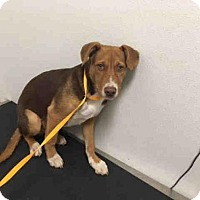 Adopt A Pet :: HOMER - Lawrence, KS