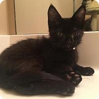 Adopt A Pet :: Reggie - Spring, TX