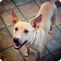 Adopt A Pet :: Eliza - Nashville, TN