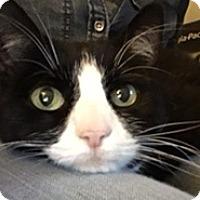 Adopt A Pet :: Moondust - Southington, CT