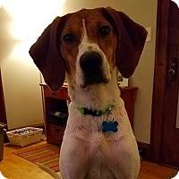 Adopt A Pet :: Dixie - Minneapolis, MN