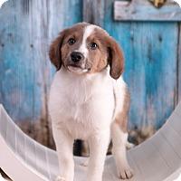 Adopt A Pet :: Elvis - Waterbury, CT