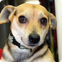 Adopt A Pet :: AIDEN - Hurricane, UT