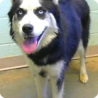 Adopt A Pet :: Pandy - Adopted - Decatur, GA