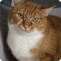 Adopt A Pet :: Kipling - Fort Collins, CO
