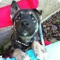 Adopt A Pet :: Missy - Surrey, BC