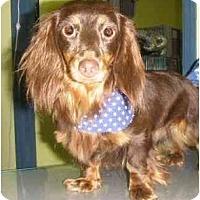 Adopt A Pet :: Paris - Mooy, AL