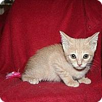 Adopt A Pet :: Destiny - Santa Rosa, CA