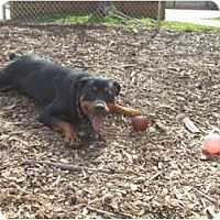 Adopt A Pet :: Wendy - Douglasville, GA
