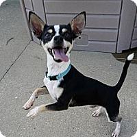 Adopt A Pet :: Kermit - Baton Rouge, LA