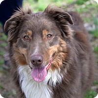 Adopt A Pet :: Mack - Lebanon, CT