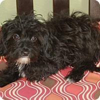 Adopt A Pet :: Hudson - Norwalk, CT