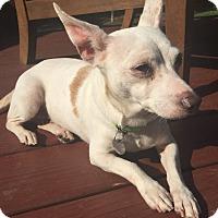 Adopt A Pet :: Freckles - Richmond, VA
