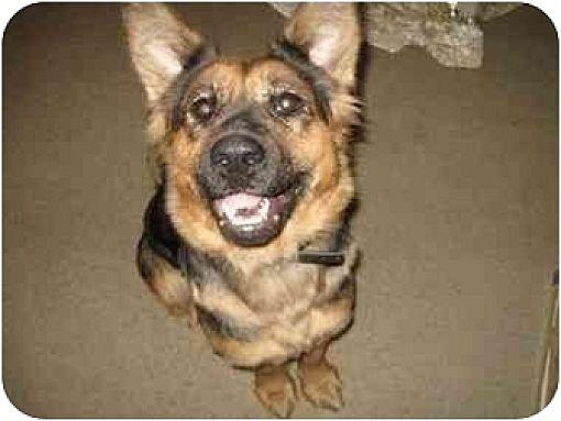 Shepherd (Unknown Type) Dog for adoption in Visalia, California - Molly