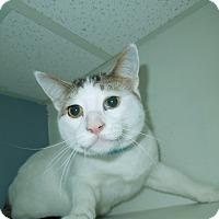 Adopt A Pet :: Larry - Medina, OH