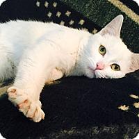 Adopt A Pet :: Tug - Addison, IL