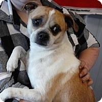 Adopt A Pet :: Doobie - Aurora, IL