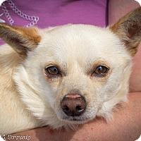 Adopt A Pet :: Alec - Loudonville, NY