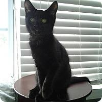Adopt A Pet :: Gunter - Sneads Ferry, NC