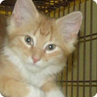 Adopt A Pet :: SHAMEOUS - Acme, PA