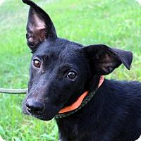 Adopt A Pet :: Daisy~meet me~ - Glastonbury, CT