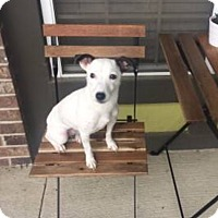 Adopt A Pet :: Pavie in Austin - Austin, TX