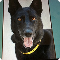 Adopt A Pet :: SHAYNE VON SYKE - Los Angeles, CA