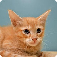 Adopt A Pet :: Benvoliio - New Orleans, LA