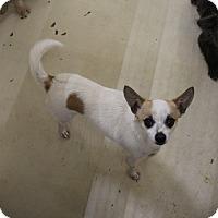 Adopt A Pet :: A23 James - Odessa, TX