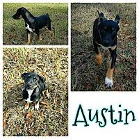 Adopt A Pet :: Austin - Bath, ME