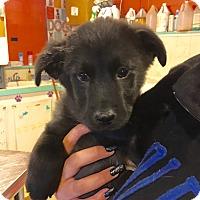 Adopt A Pet :: Miranda - Sagaponack, NY