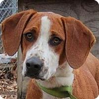 Adopt A Pet :: Butter - Washington, DC