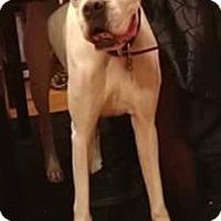 Adopt A Pet :: Jasmine - Dayton, OH
