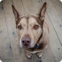 Adopt A Pet :: Regina - Englewood, CO