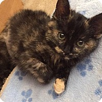Adopt A Pet :: Aria - Gainesville, FL