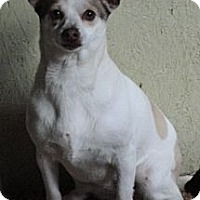Adopt A Pet :: Rover - Templeton, CA